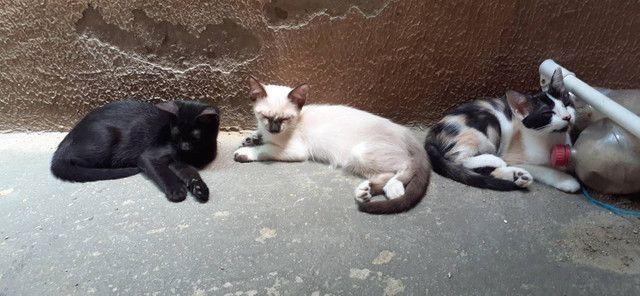 Doação Responsável de gatinhos! - Foto 3