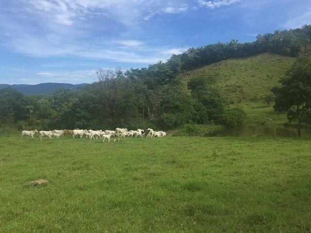 Fazenda Na Região da Agrovila  - Foto 11