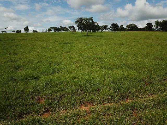 Fazenda em Bela Vista de Goiás de 15 Alqueires, à 45 km de Goiânia Dentro da Cidade - Foto 7