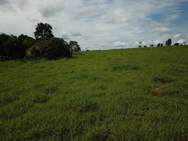 Fazenda em Bela Vista de Goiás de 15 Alqueires, à 45 km de Goiânia Dentro da Cidade - Foto 2
