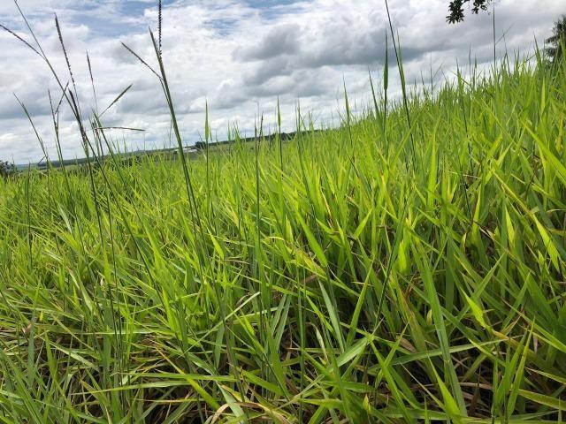 Fazenda em Bela Vista de Goiás de 15 Alqueires, à 45 km de Goiânia Dentro da Cidade - Foto 14