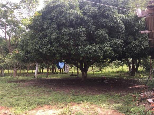 Chácara à venda em Zona rural, Cuiaba cod:21135 - Foto 9