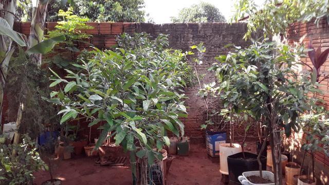 Vendas de mudas e plantas para jardim e chacaras - Foto 2