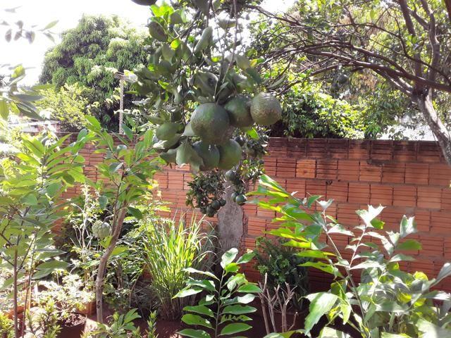 Vendas de mudas e plantas para jardim e chacaras - Foto 3