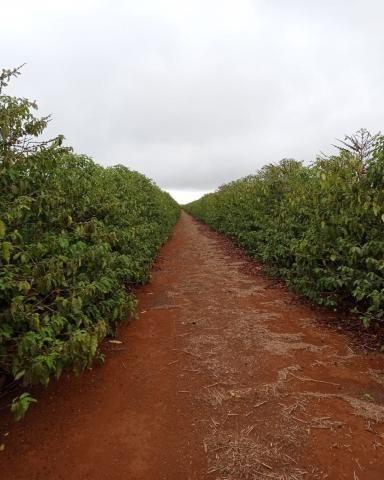 Sítio em Araguari - MG com 21 hectares - Foto 5