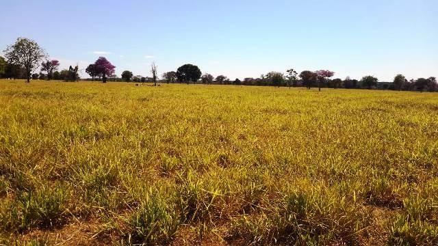Fazenda 1485 ha Barra do Bugres MT - Foto 13