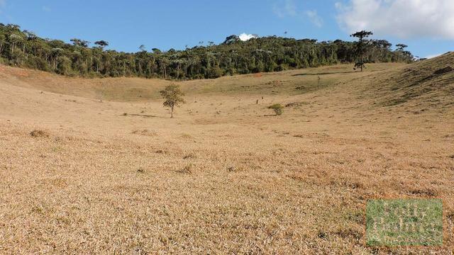 Fazenda com 588,71 hectares, situada na estrada Friburgo-Teresópolis, na altura de Vieira - Foto 14