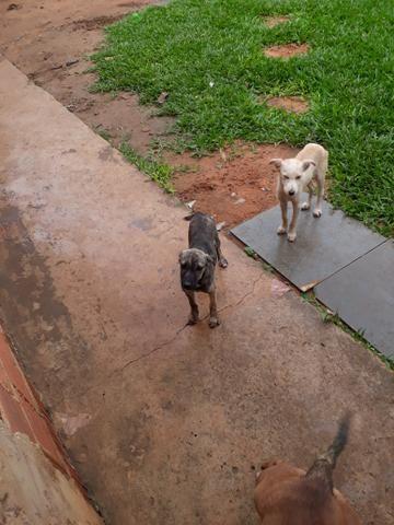 Doa se cachorrinho - Foto 2