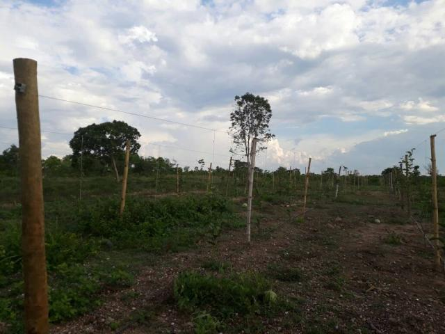 Chácara à venda em Zona rural, Varzea grande cod:20849 - Foto 14