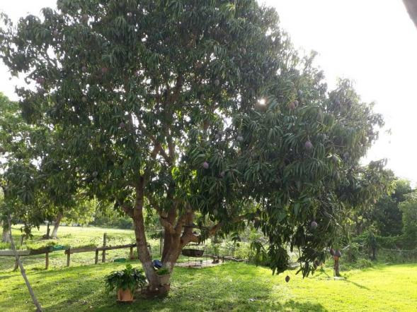 Chácara à venda em Zona rural, Varzea grande cod:20849 - Foto 16