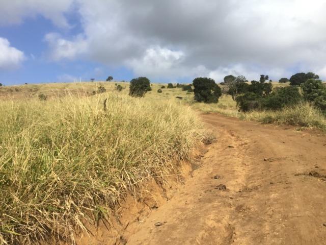 Fazenda 455.96 hectares - Governador Valadares/MG - Foto 16