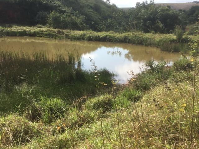 Fazenda 455.96 hectares - Governador Valadares/MG - Foto 19