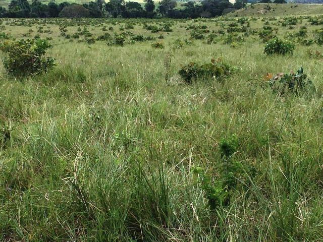 Fazenda de 137 alqueires em Abreulândia - To - Foto 16