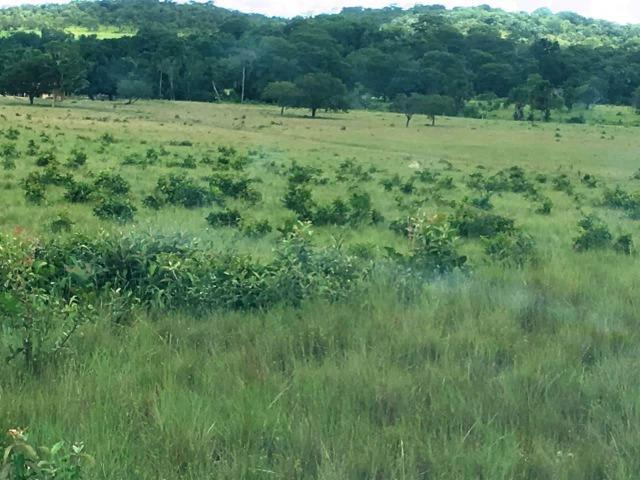 Fazenda de 137 alqueires em Abreulândia - To