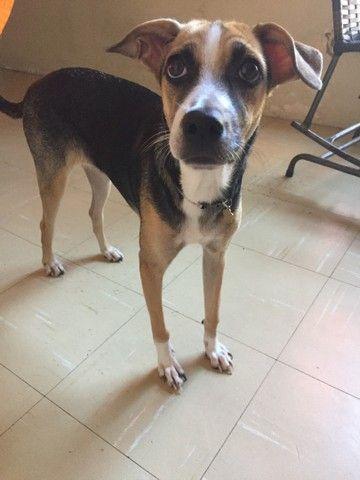 Dia - se uma  cachorra  - Foto 2