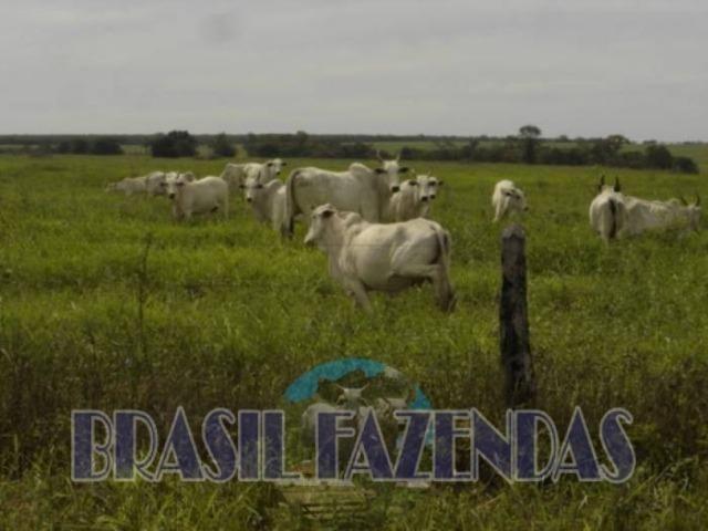 Fazenda em Barreiras. Oeste da Bahia - Foto 5