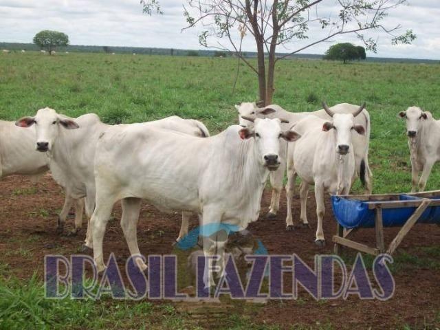 Fazenda em Barreiras. Oeste da Bahia