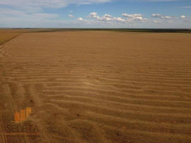 Fazenda à venda, 12650000 m² por r$ 16.000.000 - vila rica - barreiras/ba - Foto 12