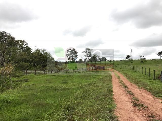 220 Alq. (Plana + Asfalto + Rio). 70 km de Goiânia - Foto 12