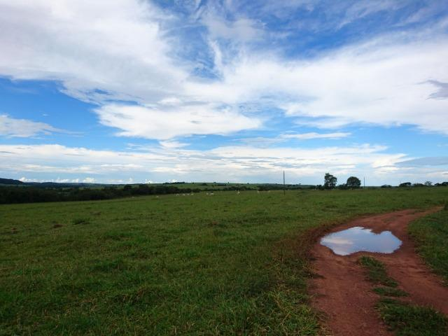 Fazenda Agrícola em Palminopolis-GO. 50 Alq. c/ 30 em Lavoura - Foto 9