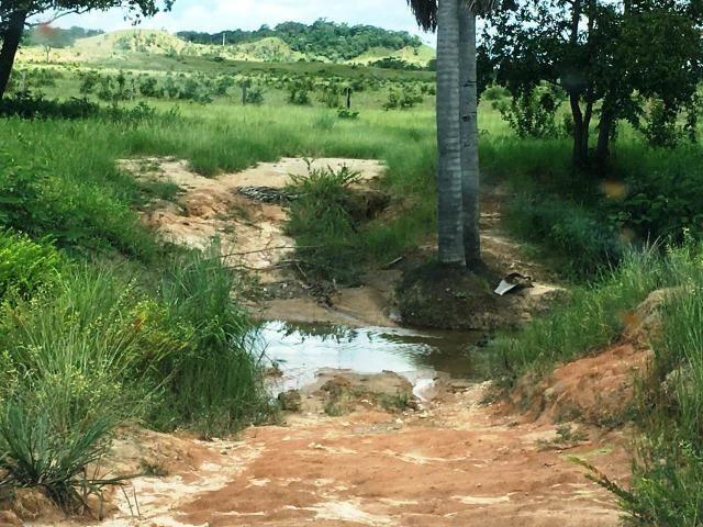 Fazenda de 137 alqueires em Abreulândia - To - Foto 19