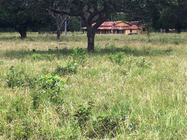 Fazenda de 137 alqueires em Abreulândia - To - Foto 18