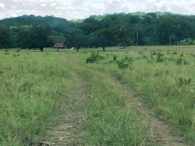 Fazenda de 137 alqueires em Abreulândia - To - Foto 5