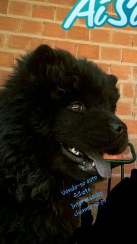 Vende-se este cachorro