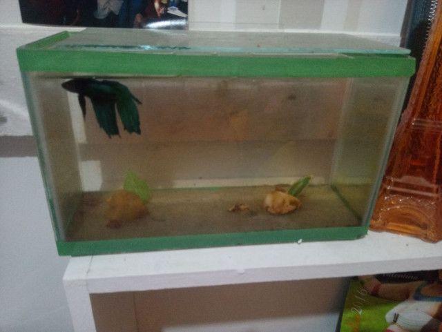 Aquario - Foto 2