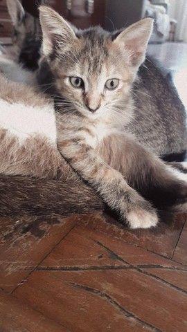 Gata Pipoca, fêmea, SRD, 2 meses  - Foto 4