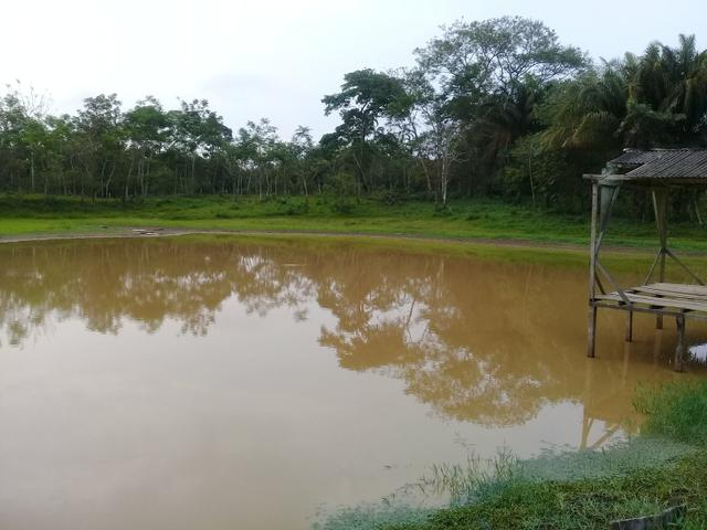 Alugo chácara 3 minutos do centro, 2 hectares - Foto 3