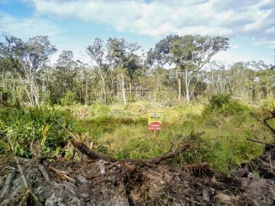 Terreno à venda em Cohapar, Guaratuba cod:125331 - Foto 10