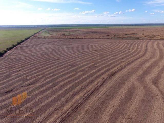 Fazenda à venda, 12650000 m² por r$ 16.000.000 - vila rica - barreiras/ba - Foto 7
