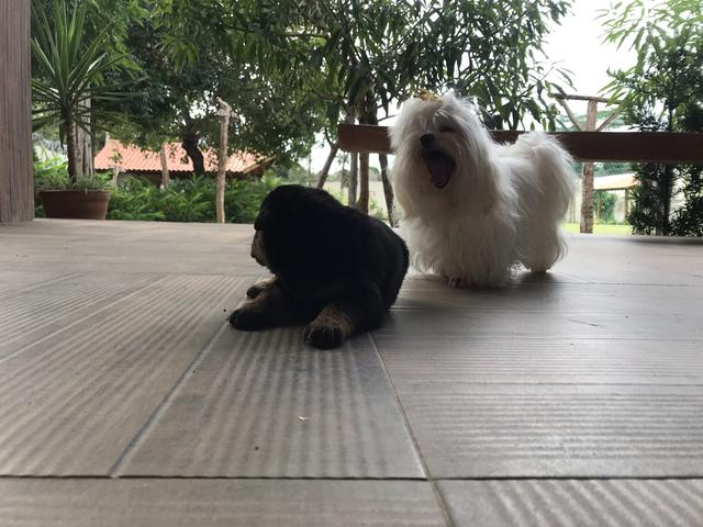 Cães - Foto 6