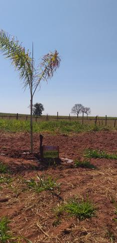 Terreno p/rancho km 11 Pereira barreto APENAS 15.000 - Foto 5