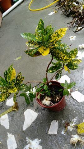 Plantas - Foto 5