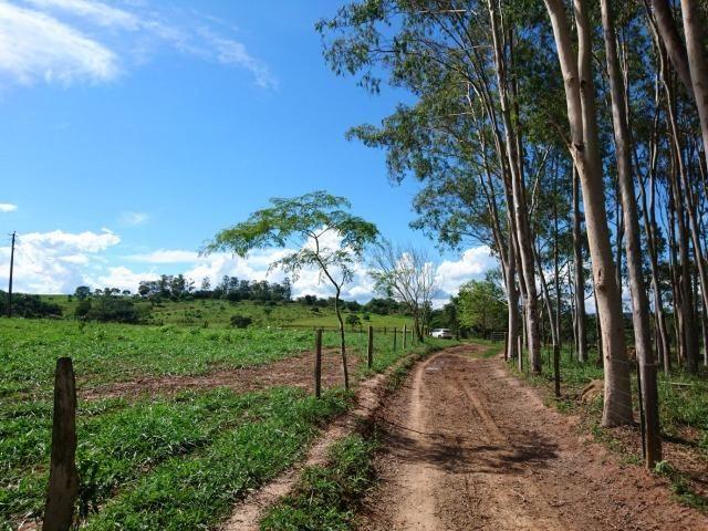 Fazenda 70 Alqueires em Cristianópolis-GO (Lavoura e Gado) - Foto 15