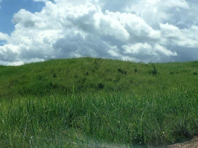 Fazenda de 137 alqueires em Abreulândia - To - Foto 7