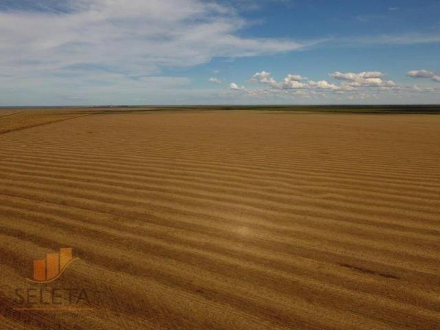 Fazenda à venda, 12650000 m² por r$ 16.000.000 - vila rica - barreiras/ba - Foto 2