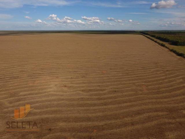 Fazenda à venda, 12650000 m² por r$ 16.000.000 - vila rica - barreiras/ba - Foto 6