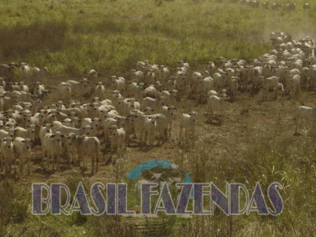 Fazenda em Barreiras. Oeste da Bahia - Foto 10