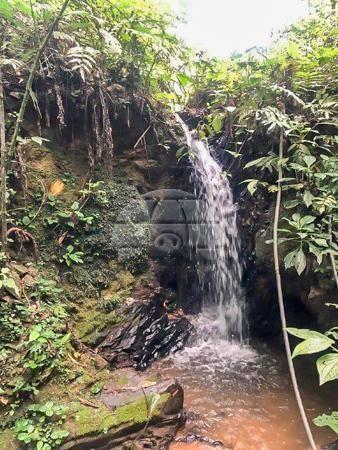 Sítio à venda em Centro, Rio branco do sul cod:155475 - Foto 4