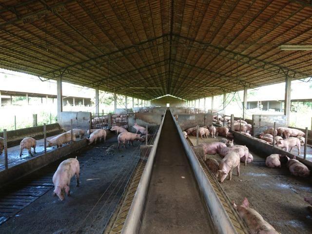 Fazenda 70 Alqueires em Cristianópolis-GO (Lavoura e Gado) - Foto 12