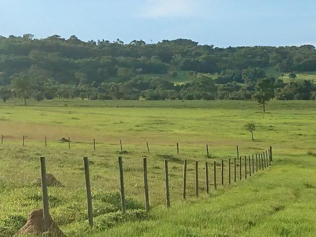 Fazenda Agrícola em Palminopolis-GO. 50 Alq. c/ 30 em Lavoura - Foto 17