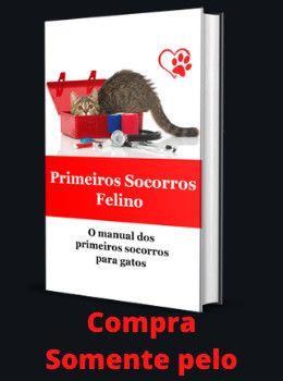 idioma felino e treinamento