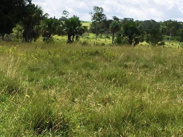 Fazenda de 137 alqueires em Abreulândia - To - Foto 6