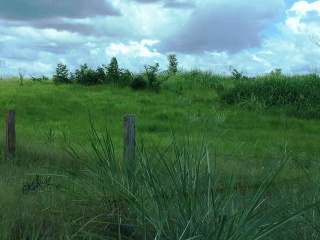 Fazenda de 137 alqueires em Abreulândia - To - Foto 13