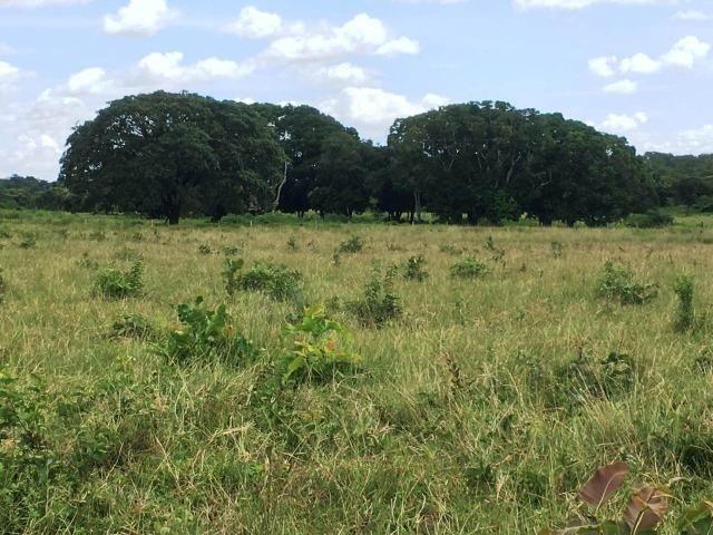 Fazenda de 137 alqueires em Abreulândia - To - Foto 10