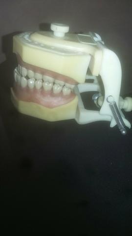 Dentes de estudos dentários