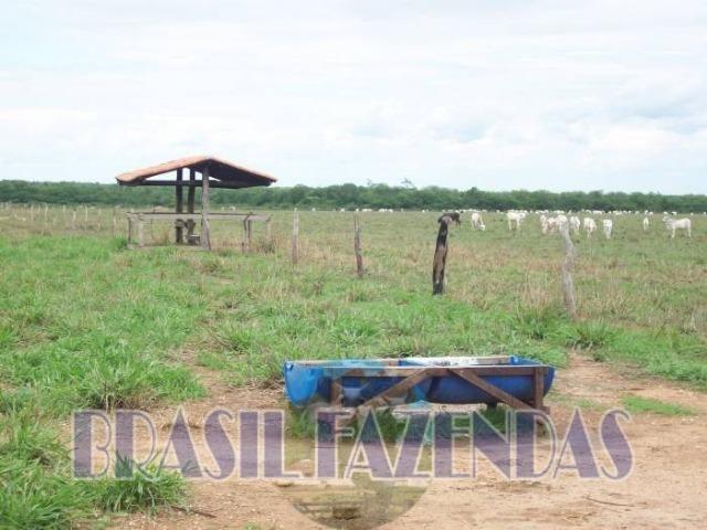 Fazenda em Barreiras. Oeste da Bahia - Foto 19